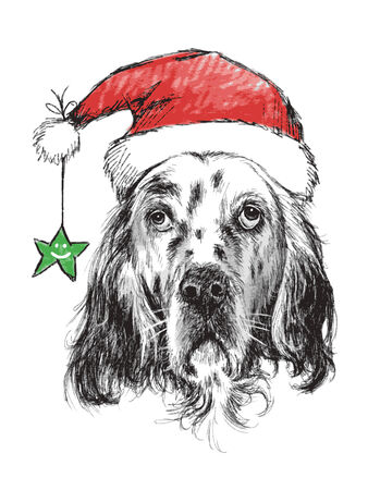 English setter with santa claus hat and  star , use for christmas background Illustration