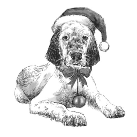 setter: hand drawn vector of English setter with christmas hat on white background Illustration
