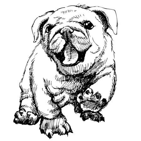 ブルドッグ子犬手描します。