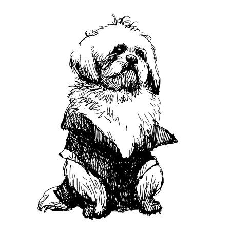 shih: Shih tzu with shirt, hand drawn vector.