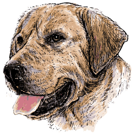 labrador puppy: Image of Labrador Retriever hand drawn vector