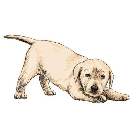 Image of Labrador Retriever puppy hand drawn vector