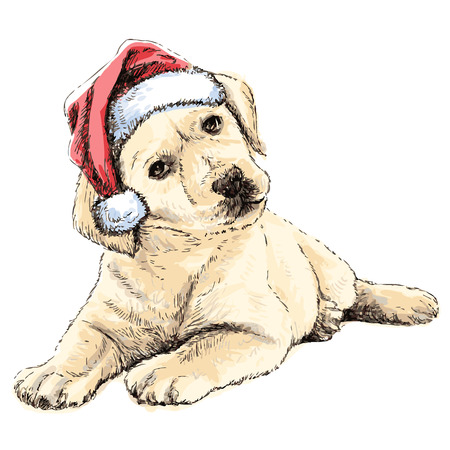 labrador christmas: Labrador Retriever with santa claus hat hand drawn vector , use for christmas background
