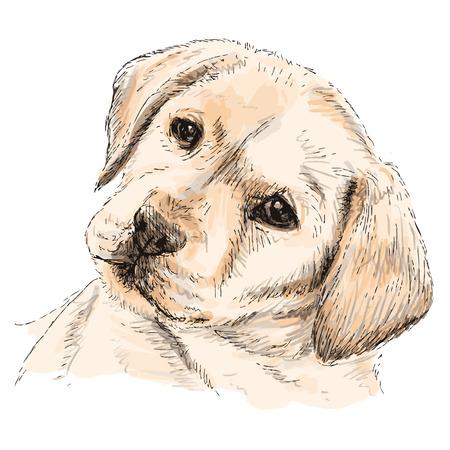 labrador: Image of Labrador Retriever puppy hand drawn vector