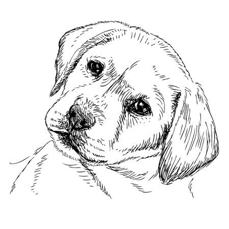 ラブラドールレトリバーの子犬の画像手描きの背景  イラスト・ベクター素材