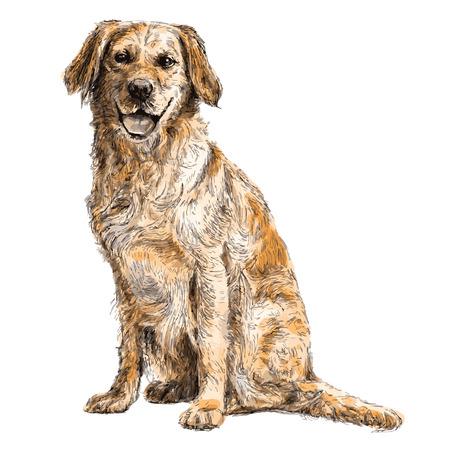 Afbeelding van de gele Labrador Retriever hand getrokken vector Stock Illustratie