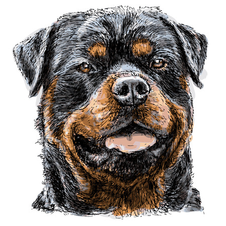 Afbeelding van Rottweiler handgetekende vector Stock Illustratie