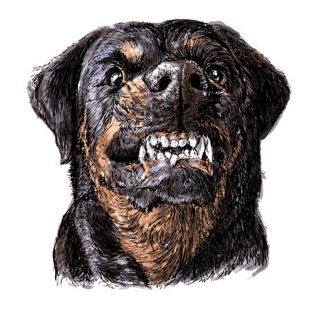Image of angry Rottweiler hand drawn vector