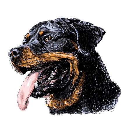 miniature breed: Imagen de Rottweiler vector dibujado a mano Vectores