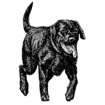 黒ラブラドル ・ レトリーバー犬の手のイメージ描画ベクトル  イラスト・ベクター素材