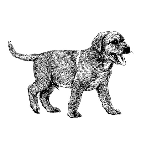 Image of yellow Labrador Retriever hand drawn vector