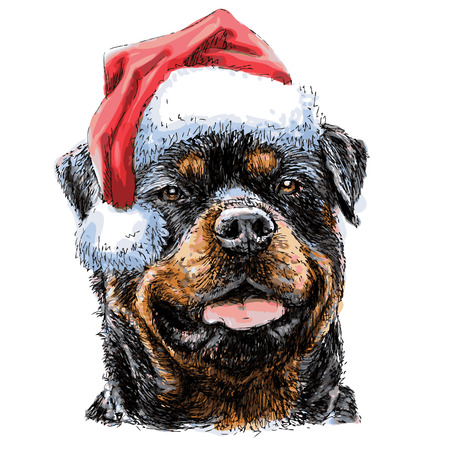 Rottweiler with santa claus hat hand drawn vector , use for christmas background