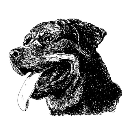 Image of Rottweiler hand drawn vector Ilustrace
