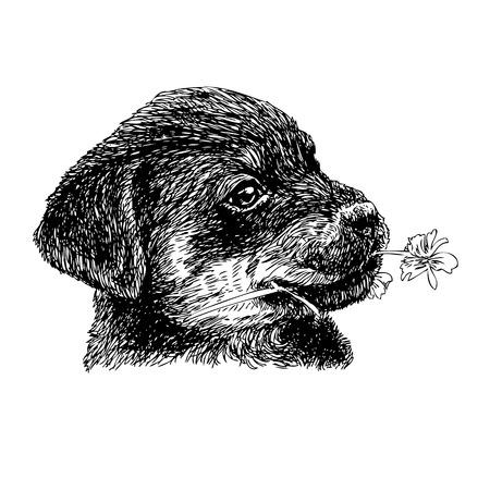 Afbeelding van puppy Rottweiler handgetekende vector Stock Illustratie