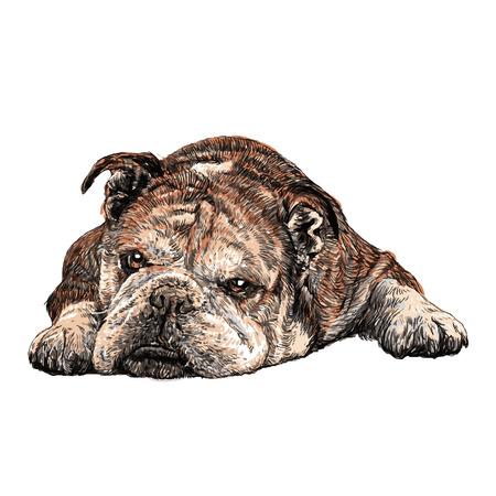 Afbeelding van bulldog hand getrokken vector Stock Illustratie