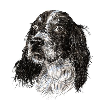 イングリッシュ ・ セッターの手描きの画像  イラスト・ベクター素材