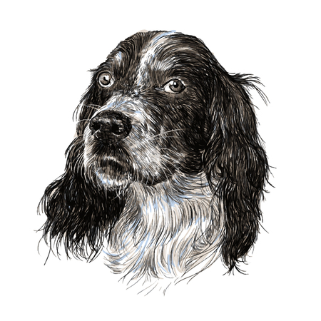 setter: Image of English setter hand drawn