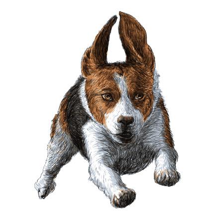 実行中のビーグル犬の手描きの画像