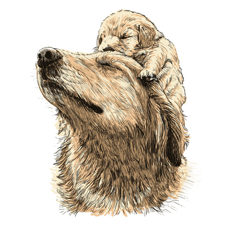 labrador: Labrador retriever and puppy on head hand drawn