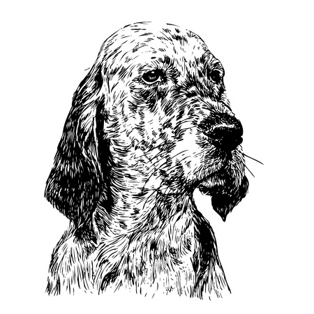 Image of English setter hand drawn vector Stock Vector - 39682272