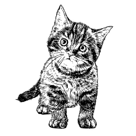 kittens: Little cat hand drawn isolated on white background Illustration
