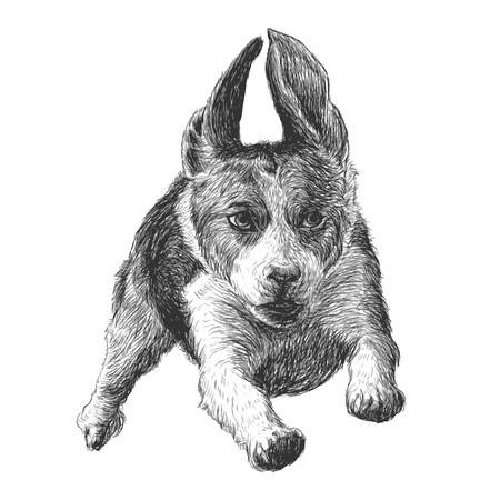 beagle puppy: Image of running beagle hand drawn vector