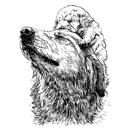 labrador: Labrador retriever and puppy on head hand drawn vector Illustration