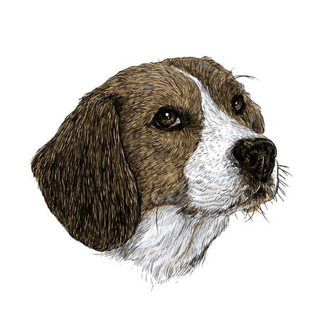 Image of beagle hand drawn vector