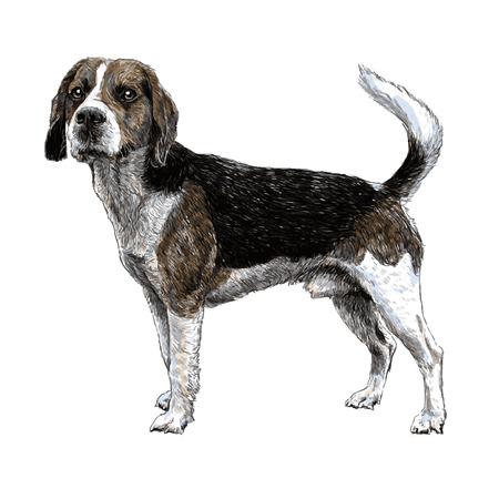 ビーグルの画像手描きの背景