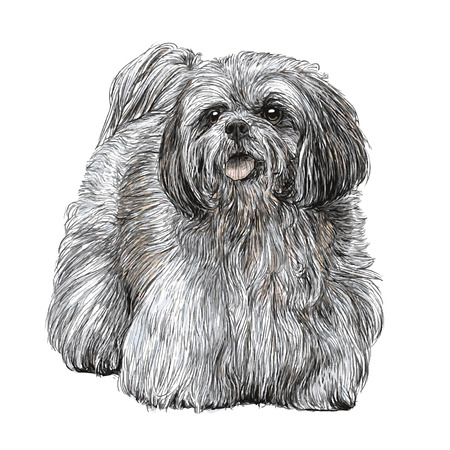 Image of Lhasa Apso hand drawn vector Stok Fotoğraf - 40271862