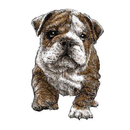 Afbeelding van bulldog hand getrokken vector Stockfoto - 40271875