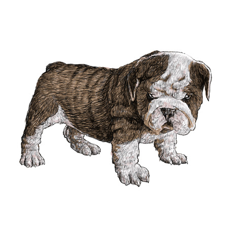obedient: Image of bulldog hand drawn vector Illustration