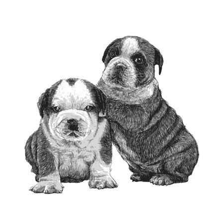 Image of bulldog hand drawn vector Çizim