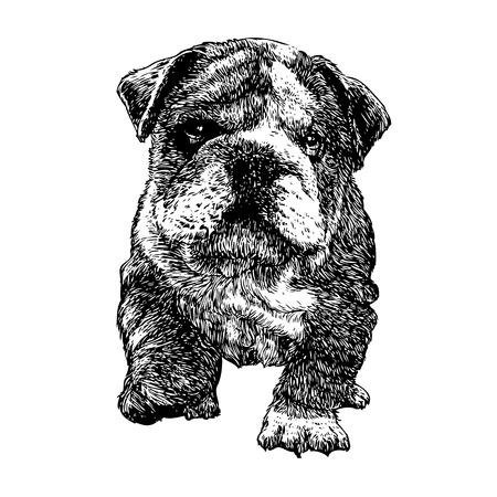 ブルドッグのイメージの手描きの背景  イラスト・ベクター素材