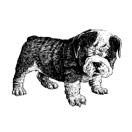 Image of bulldog hand drawn vector Stock Illustratie