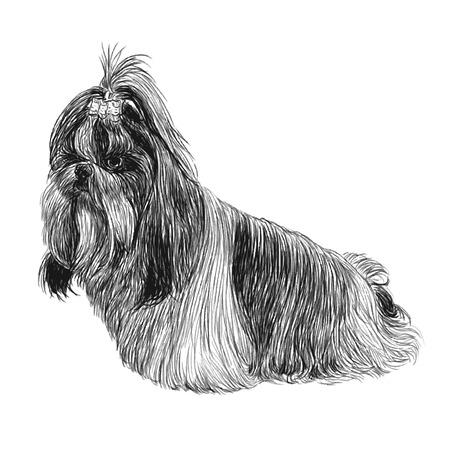シーズーのイメージの手描きの背景