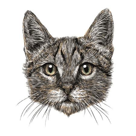 Kleine kat hand getekend geïsoleerd op een witte achtergrond
