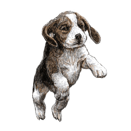 Afbeelding van beagle hand getrokken vector Stockfoto - 41116325