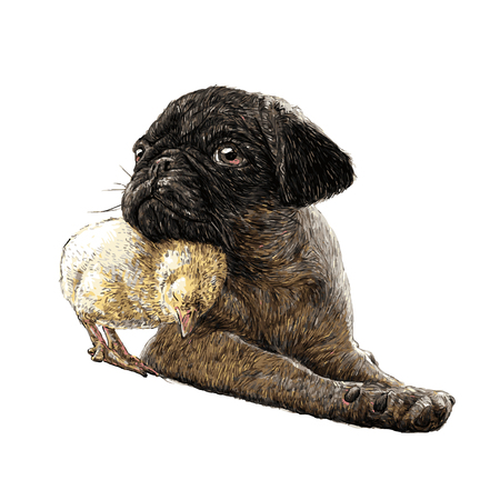 pug dog: Image of Pug dog ang a chick hand drawn vector