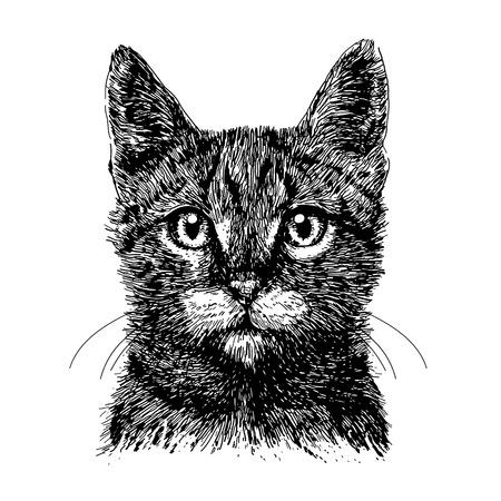 Little cat hand drawn isolated on white background Illusztráció