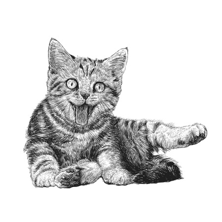 hairy legs: Little cat hand drawn isolated on white background Illustration