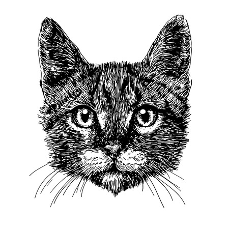 Little cat hand drawn isolated on white background Stock Vector - 41617359