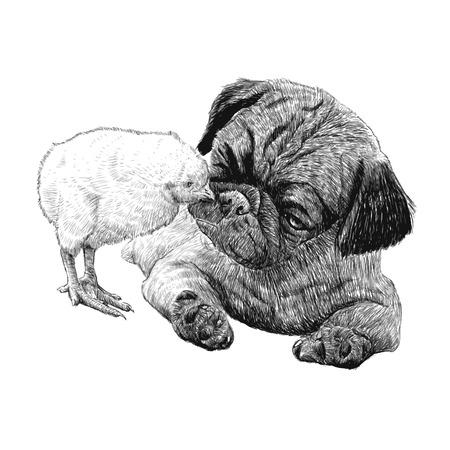 Image of Pug dog ang a chick hand drawn vector
