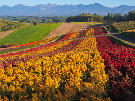 Irodori field, Tomita flower farm, Nakafurano, Hokkaido, Japan Stockfoto