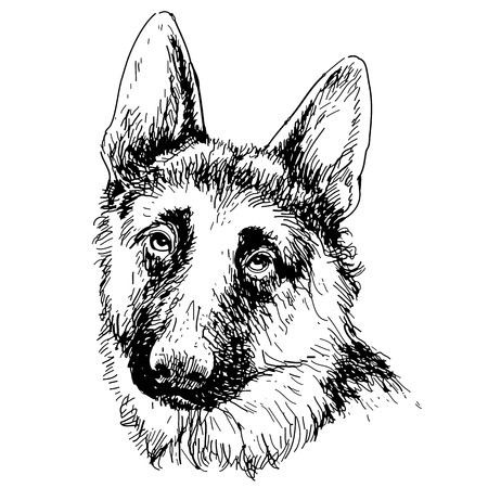 alsatian: German Shepherd hand drawn vector isolated on white background