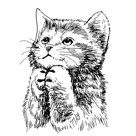 cute kitten: lovely kitten hand drawn vector isolated on white background