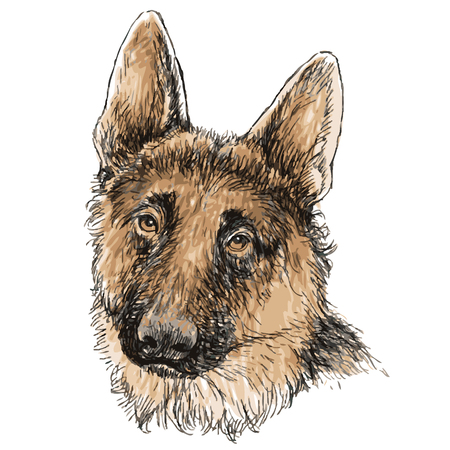 German Shepherd hand drawn vector isolated on white background