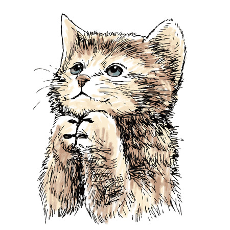 Mooie kitten hand getekende vector geïsoleerd op een witte achtergrond Stockfoto - 43370465
