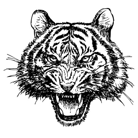 ferocious: head of angry tiger hand drawn on white background Illustration
