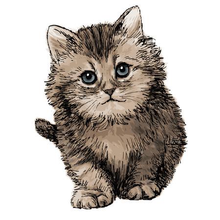 lovely kitten hand drawn isolated on white background